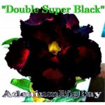 Double Super Black